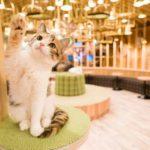 大人気!猫カフェ「MoCHA」が、10月19日・秋葉原に新店舗オープン!