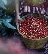 コロンビア豆 コーヒー