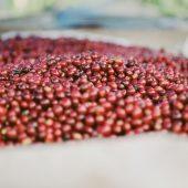 「手網焙煎入門」手順編!旨さが違う!自宅で出来るコーヒー豆焙煎のやり方!